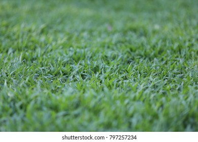 grass shallow depth of field