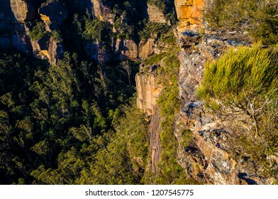Grass and shrubbery growing on craggy cliffs at sunset in the Blue Mountains National Park in Katoomba, Australia. Looking down a rock face into a forest in a mountain valley.