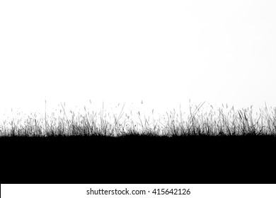 Grass silhouette on a white background