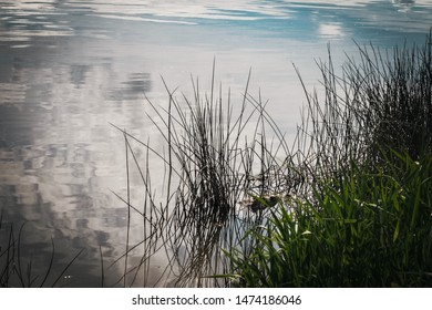 Grass sits in gently rippling water from a slight breeze, as the sky beautifully reflects on murky water of the lake shore.