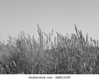 grass with sky black and white backgrounds