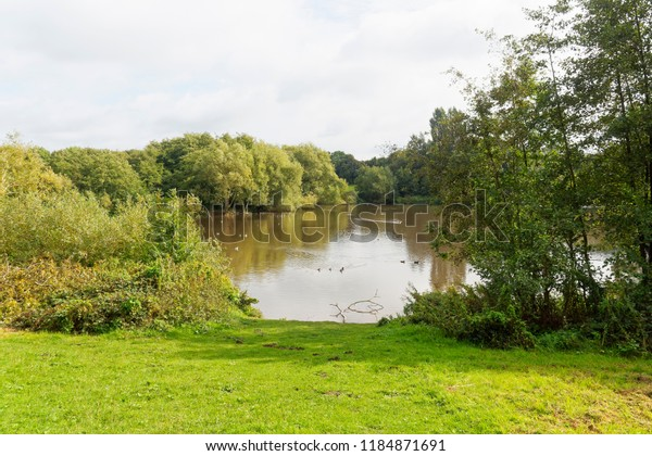 A grass slope leads down to a gap in the trees to a small lake where swans and ducks are swimming.