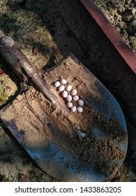 Imagenes Fotos De Stock Y Vectores Sobre Snake Egg Shutterstock