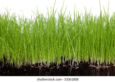 Grass and soil on a white background