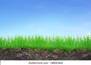 Grass in soil over blue sky background