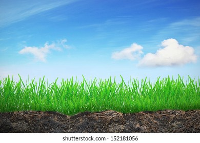 Grass in soil over sky and near the walkway