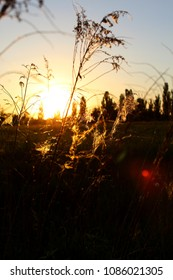 grass with spiderweb in front of a beautiful sunset
