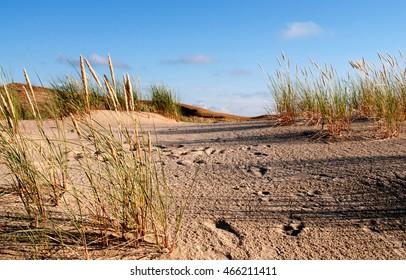 Grass stems on sand dune