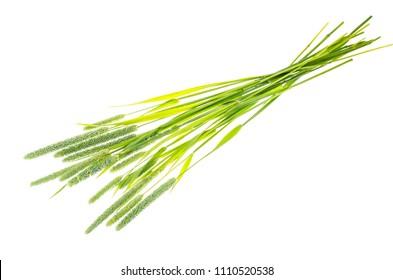 Grass stems Phleum. Studio Photo
