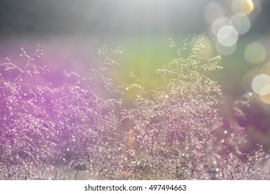 grass straws with dew-drops. backlight