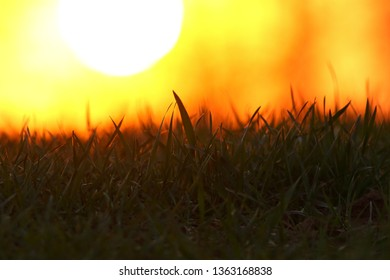 Grass in summer time against sunrise. Corn field sunset.