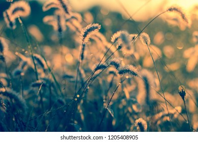 grass with sun sunlight sunrise background color