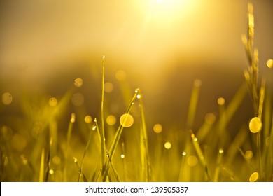 Grass with sun at sunrise