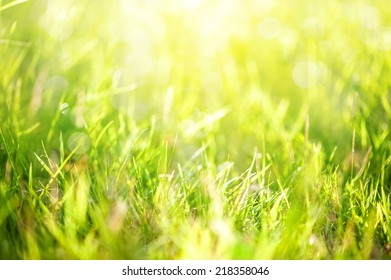 grass with sunlight in background