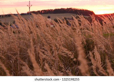 Grass in sunset light.