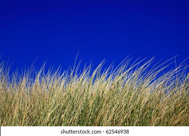 Grass swaying in the wind on the beach with deep blue sky