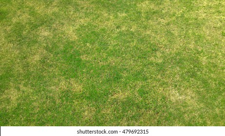 Grass texture. grass background.
