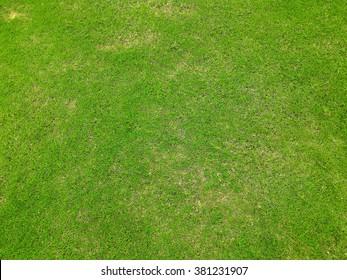 Grass texture. grass background. artificial grass