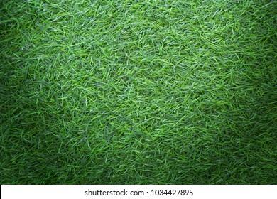 Grass texture background for golf course, soccer field or sports concept design. Artificial green grass.