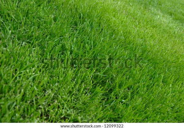 Grass texture, in the garden