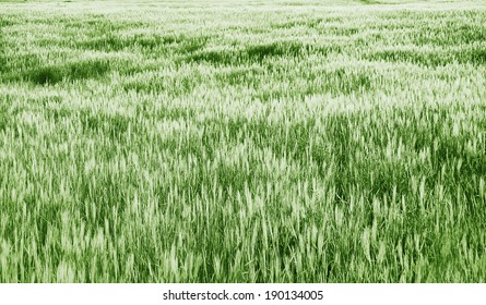 grass texture on sunset - green tones