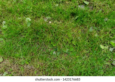 grass texture top view with leaves and long green blades of gras