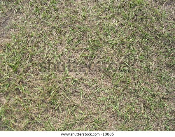 Grass that needs water