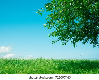grass and tree nature background