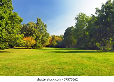 grass and trees in a park
