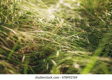 Grass under bright sunlight. Shallow depth of field