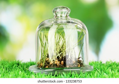 Grass under glass cover on ground