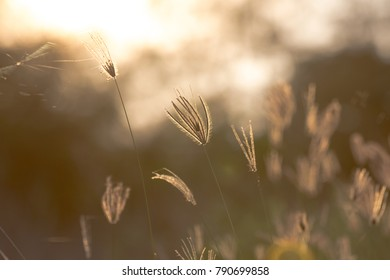 The grass in the warm light with the spider.