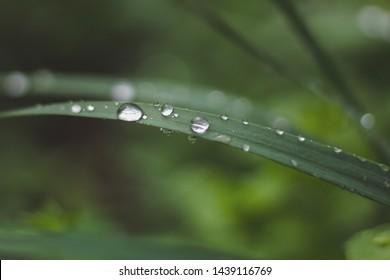 grass, water, dew, green, nature, drop, leaf, drops, plant, rain, macro, wet, morning, blade, summer, leaves, fresh, freshness, close-up, raindrop, garden, flora, environment, spring, backgrounds, flo