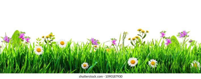 Gras und floraler Hintergrund