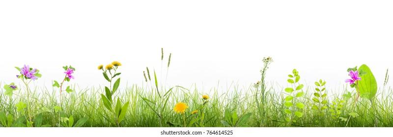 Gras und Wildblumen einzeln auf Hintergrund