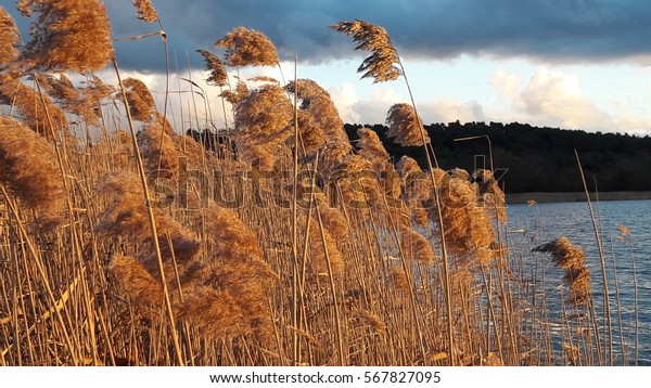 Grasses blowing in the wind by the lake