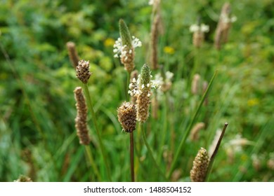 Grasses and Conical Seed Heads Blowing in the Wind with soft green and yellow background