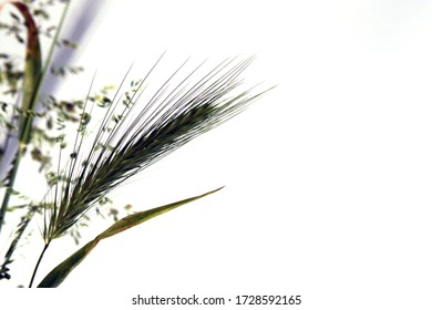 grasses and ears on a white background close up