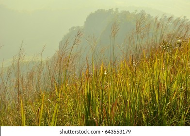 Grasses On The mountain