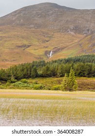 Grasses on Scottish Loch, Isle of Skye, Scotland, UK