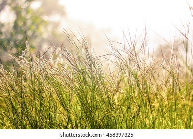 Grasses on the sunset