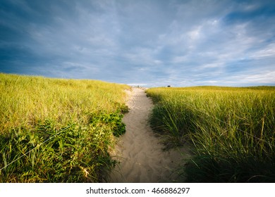 Grasses and path over sand dunes at Race Point, in the Province Lands at Cape Cod National Seashore, Massachusetts.