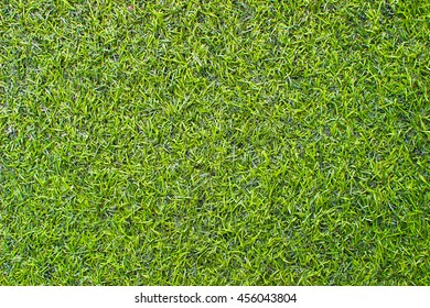 Grasses seamless texture background