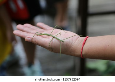 Grasshopper Branch on hand