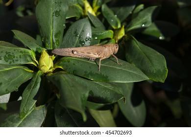 Grasshopper in the dark