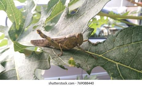 a grasshopper finding food