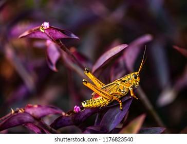 Grasshopper in the garden colors