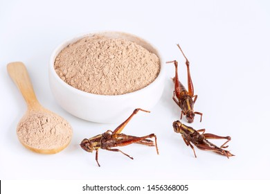 Grasshopper insect powder. Orthoptera flour for Insects eating as food edible items made of cooked insect meat in bowl and spoon on white background is good source of protein. Entomophagy concept.