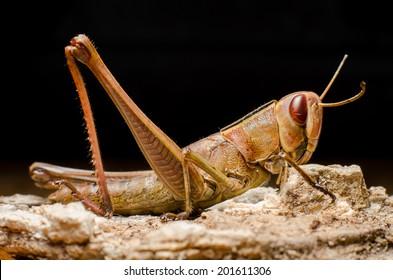 grasshopper on bark.