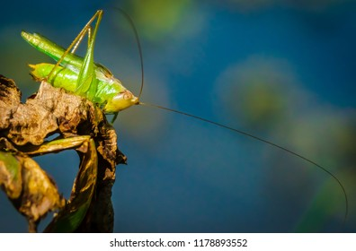 Grasshopper on plant nature macro photography